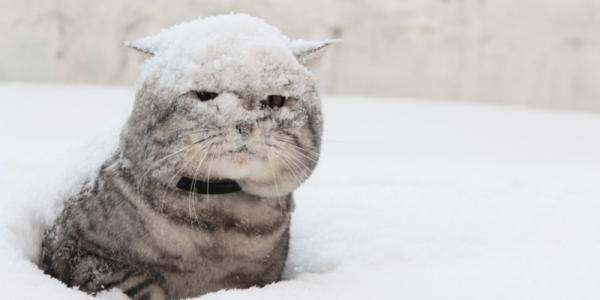 На Кременчуг надвигаются снегопады с образованием покрова высотой 25-30 см