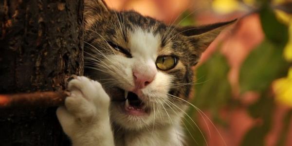 Кременчугские спасатели полтора часа снимали с дерева кота