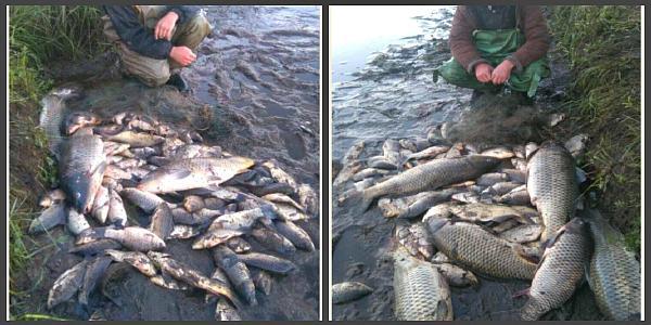 На Полтавщині упродовж дня браконьєри наловили риби на 15 тисяч гривень