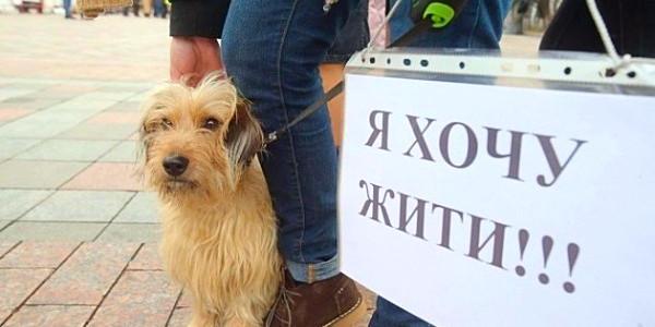 За жорстоке поводження с тваринами каратимуть позбавленням волі до восьми років
