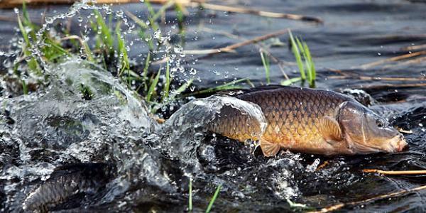 Для охраны рыбных ресурсов на Полтавщине не хватает современной техники