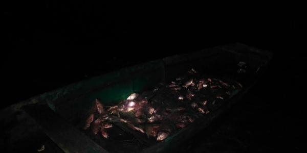 В Сулинском заливе полиция Кременчуга обнаружила 58 кг незаконно выловленной рыбы