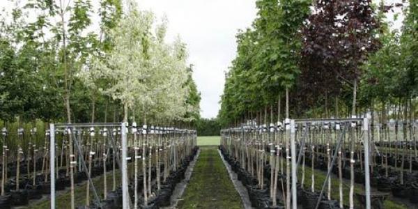 Компания экс вице-мэра Кременчуга обеспечит город саженцами  и цветами на миллионы гривень?