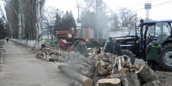 Проводится кронирование зеленых насаждений в нагорной части Кременчуга