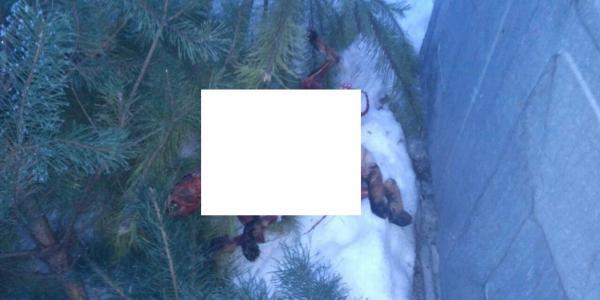В Кременчуге с собак содрали шкуру