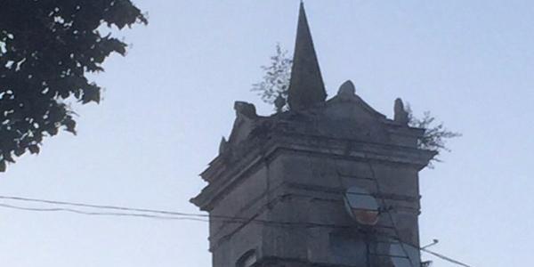 Мэр Малецкий возмущен «новыми тенденцями озеленения» в Кременчуге