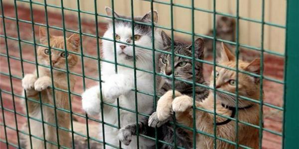 В Кременчуге организуют приют для кошек