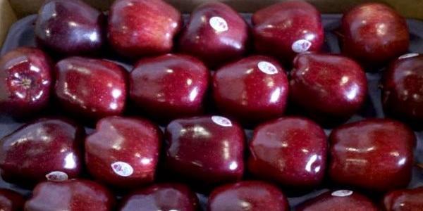В кременчуцькій мерії «наїхали» на волонтерів за торгівлю яблуками