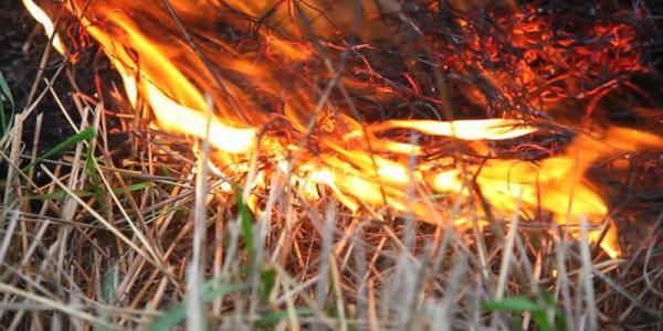 Під Кременчуком згоріло 4 га сухої трави