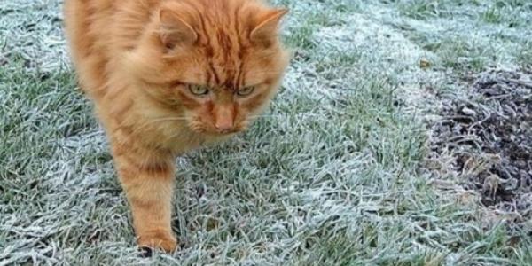 Цієї ночі очікуються заморозки на ґрунті до -5 градусів