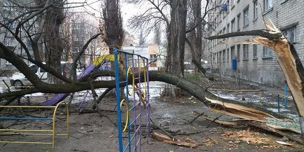У центрі Кременчука трухляве дерево впало на дитячий майданчик