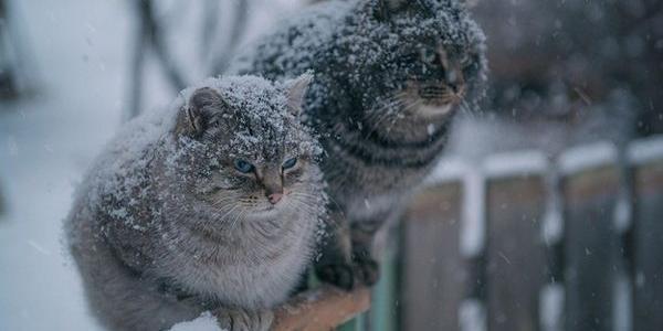 Рекордное тепло или морозы до -25: синоптики рассказали о зиме в Украине