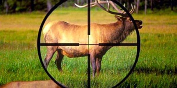 Штрафи за браконьєрство збільшені у чотири рази
