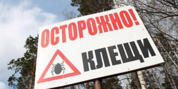 Будьте осторожны: в районе Щербаков «обосновались» клещи
