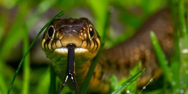 В Кременчуці пенсіонерку вкусила змія