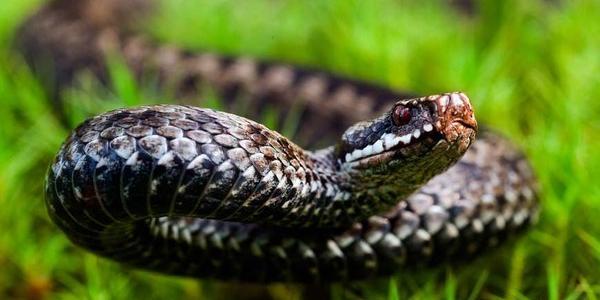 На Полтавщині жінку у річці вкусила змія