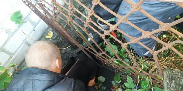 Кременчуцькі рятувальники визволили собаку, який застряг у паркані
