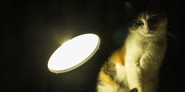 В понеділок, 20 листопада, не буде світла в Крюкові та в центрі Кременчука