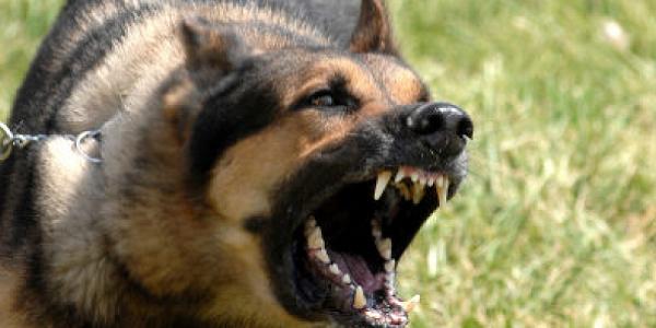Під Кременчуком на чоловіка накинувся сторожевий пес
