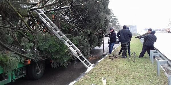 Головна ялинка країни дорогою у Київ потрапила у ДТП
