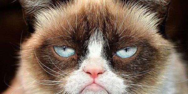 Парню грозит приличный срок за издевательство над соседским котом
