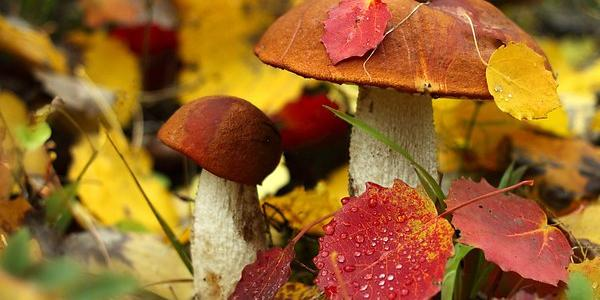 Кременчужанка отруїлася грибами