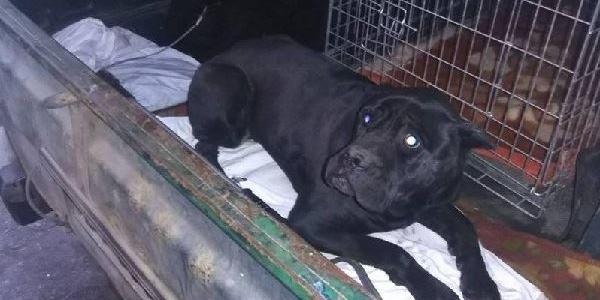 На Первой Занасыпи нашли «домашнюю» собаку, которую предположительно сбил автомобиль