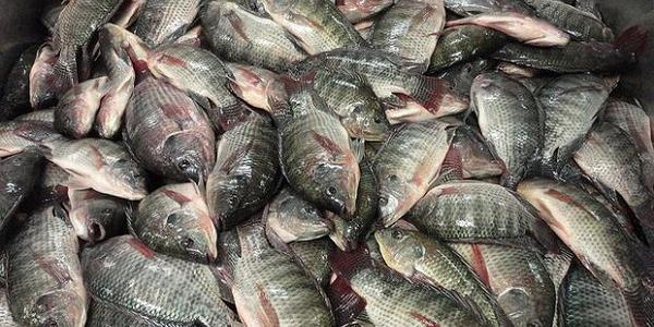 Дружину кременчуцького рибалки на адмінкомісії попередили, та не оштрафували