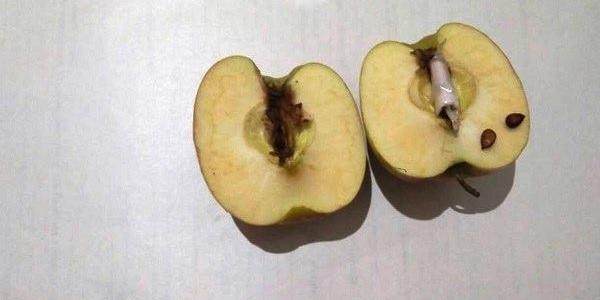 «Эх, яблочко, да на тарелочке»: заключенному пытались передать наркотики внутри яблока