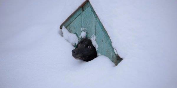 Просять допомоги: мешканців кременчуцького притулку для тварин знову замело