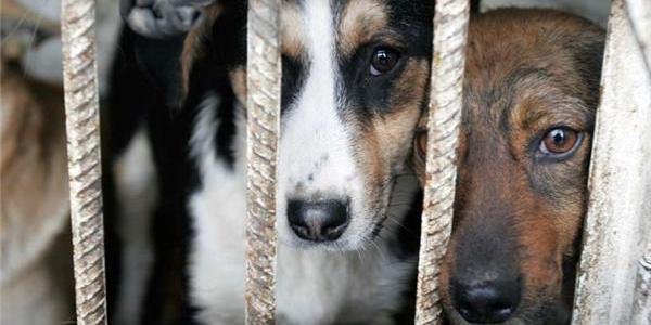 За жорстоке поводження з тваринами тепер саджатимуть до в'язниці