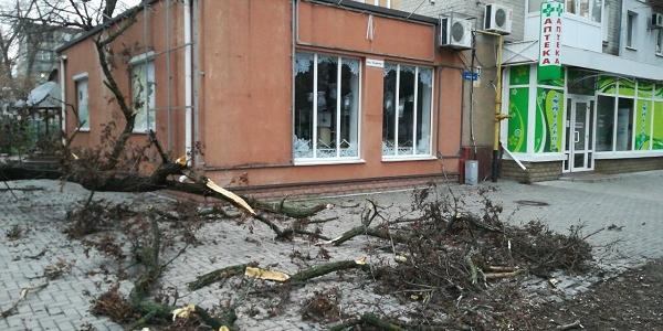 У центрі Кременчука стара акація завалилася на пішохідну зону бульвару Пушкіна