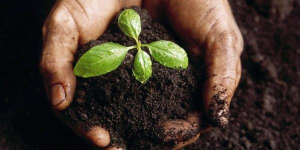 Агрофірма на Полтавщині переходить на органічне землеробство