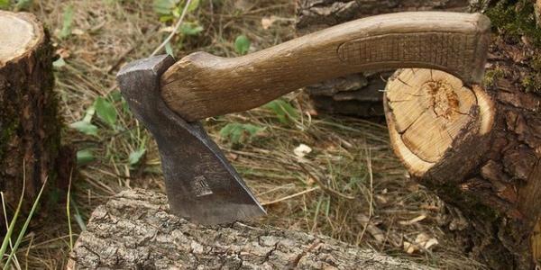 Майже півсотні дерев хочуть зрубати на території кременчуцьких шкіл і дитсадків
