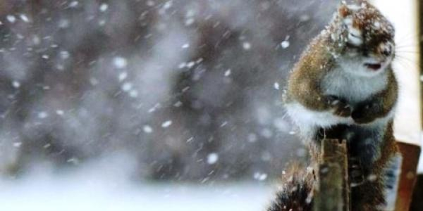 Кременчук отримав попередження про мокрий сніг та дощ найближчим часом