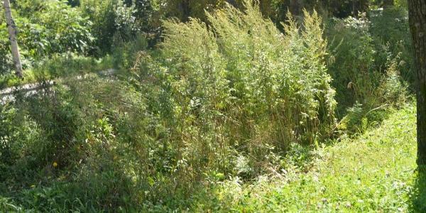 Керуюча компанія в Кременчуці не може покосити траву, а відповідати довелося власниці магазину