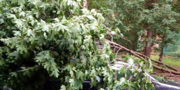 На бульваре Пушкина ветка от дерева упала на автомобиль Volkswagen