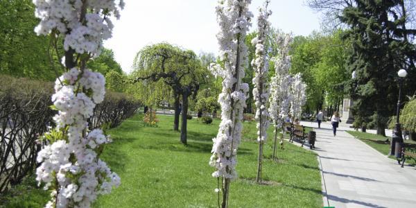 Весенний Кременчуг радует всех своими красками