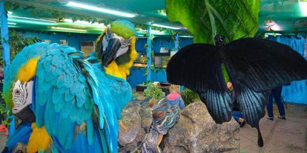 Бабочки, исполняющие желание, самая быстрая черепаха и прекрасные Ары  ждут кременчужан на выставке