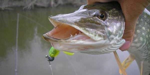 Як можна покращити рибальство у Полтавській області