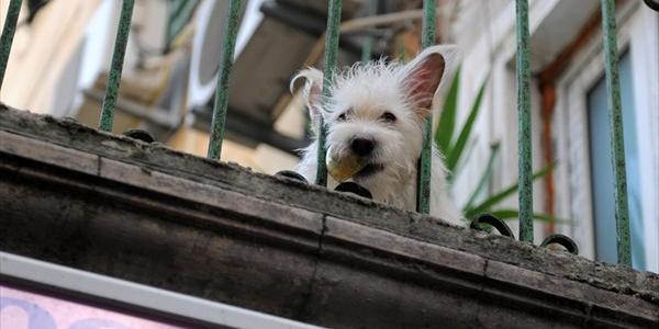 Кременчужане: «Дети просыпаются и плачут от того, что на балконе соседей воет собака»