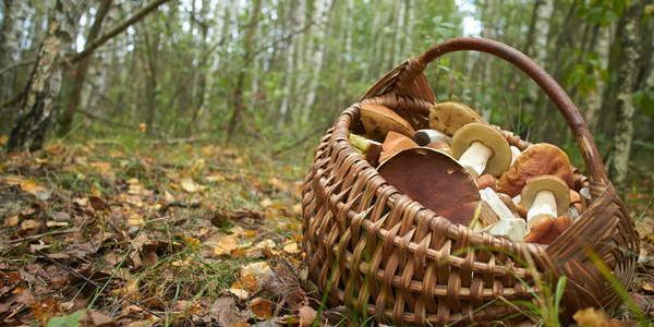 У плавнях в Кременчуцькому районі загубився грибник