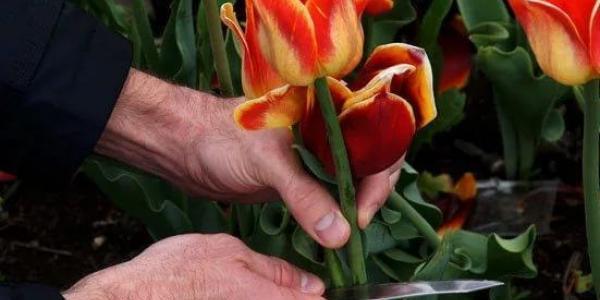 Админкомиссия рассмотрела протокол о сорванных цветах на клумбе в нагорной части города.