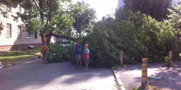 Вітер зломив дерево посеред внутрішньоквартальної дороги.