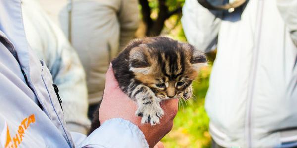 Як живеться безпритульному кошеняті після порятунку мером Малецьким