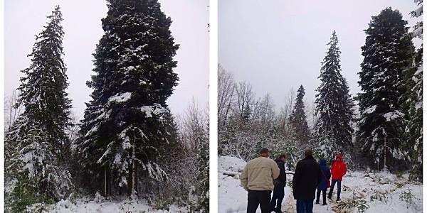 Подарунок від КрАЗу: головною новорічною ялинкою країни обрали 90-річну зелену красуню