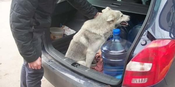 В Кременчуге ищут хозяина собачке, которую сбила машина