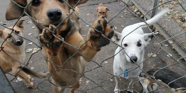 У Кременчуці рекордна кількість бездомних собак