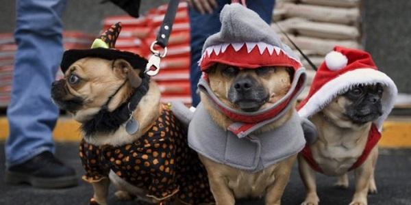 «Спецсервіс Кременчук» приведе на костюмований парад «казкових» тваринок