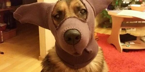За выгул собак без намордников и в неустановленных местах в Кременчуге – штрафуют